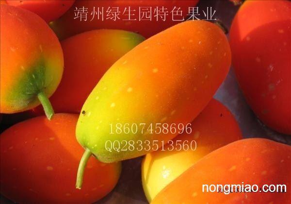 新型高端水果红参果