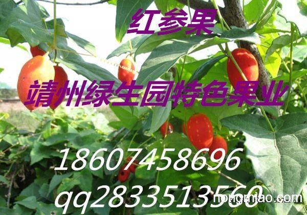 红参果种子哪里买