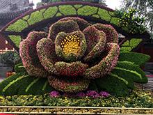 花,五色草造型,花卉造型设计制作