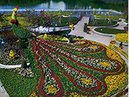 凤凰造型,节日花卉造型,植物绿雕