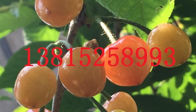 苏州花木绿化公司、庭院景观绿化工程