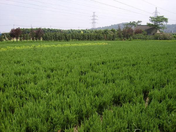 沭阳县生隆园林苗木场