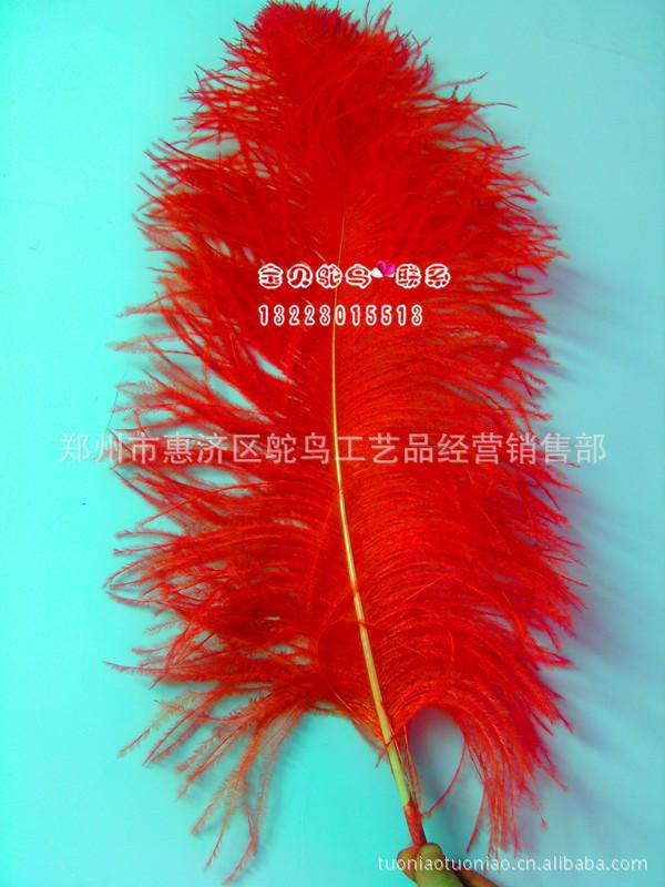 郑州市惠济区鸵鸟工艺品经营销售部