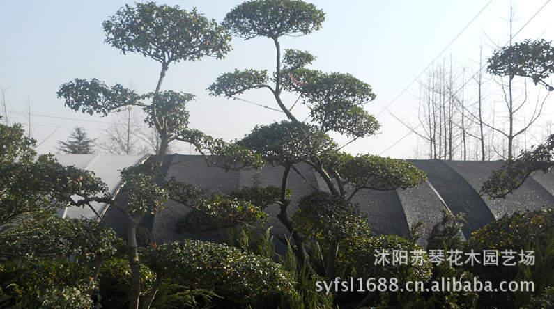 沭阳苏琴花木园艺场