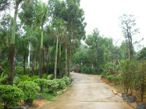 东莞市新艺园林绿化工程有限公司