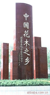 沭阳珂宇园林绿化苗木中心