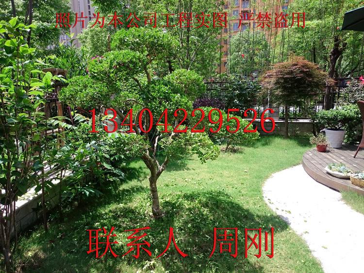 苏州庭院景观设计绿化工程有限公司