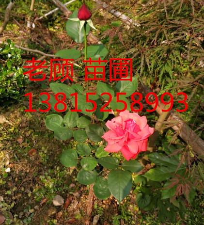 吴中区光福庭园景苗圃