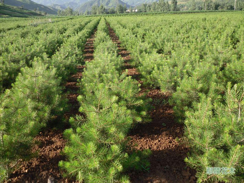 苗木生产技术 方栋龙
