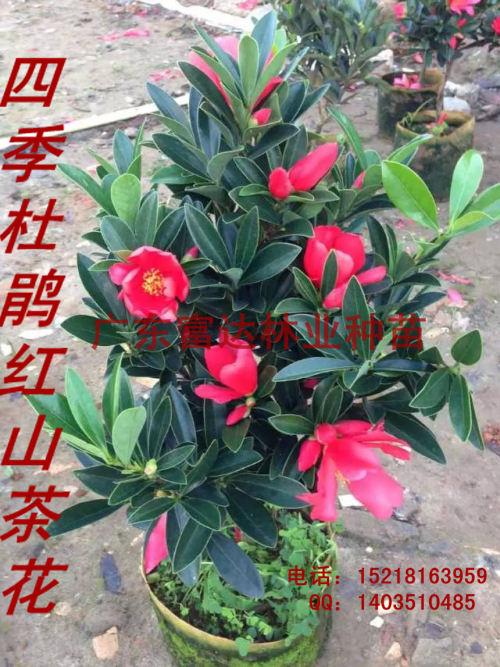 mmexport1451991624497.jpg