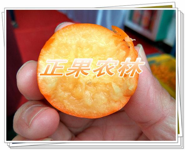 脆蜜金柑 . (2).jpg
