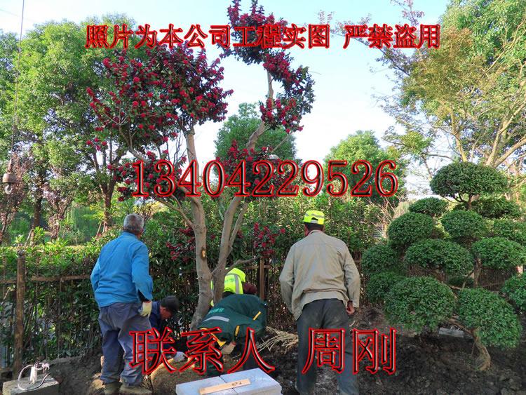 春绿化 (14) - 196kb.jpg
