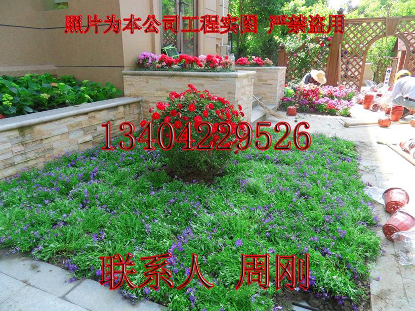 私家花园 (3) - 297kb.jpg