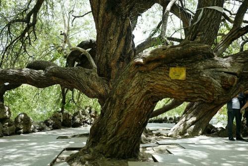 古树防腐补洞技术