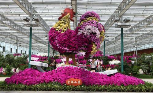 江苏淮安:推进树种更新改造 发展珍贵彩色树种