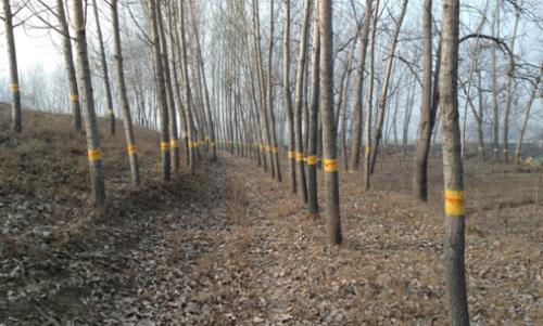 河南主要林业有害生物仍将偏重发生