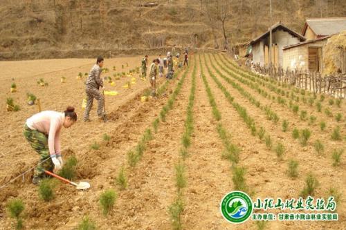 黑龙江鹤岗:加强苗木管护确保栽植成活