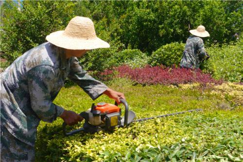 抗旱护林保绿化山东西岗镇开展夏季绿化苗木管护