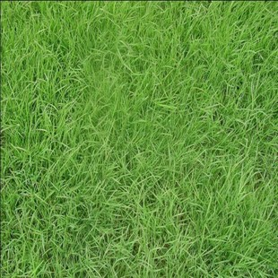 无土草皮 草坪学_人造草坪草皮_草皮和草坪