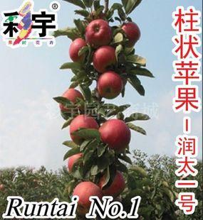供应润太一号柱状苹果树苹果苗,果树,果苗,花卉,花卉苗