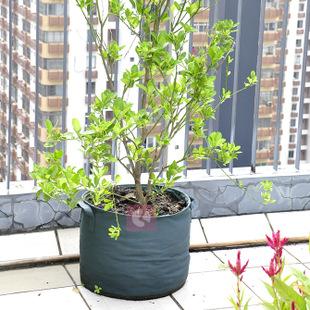 圆形种植袋阳台楼顶专用种植器环保方便花盆花钵种植袋