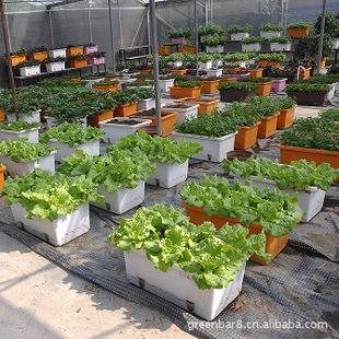 【绿吧】有机环保自动恒湿盆/屋顶种植/阳台蔬菜种植箱/自动保水