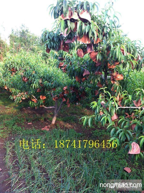 景观桃树素材ps