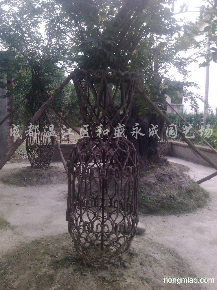供应紫薇花瓶造型|其它图片及价格-成都温江区和盛场
