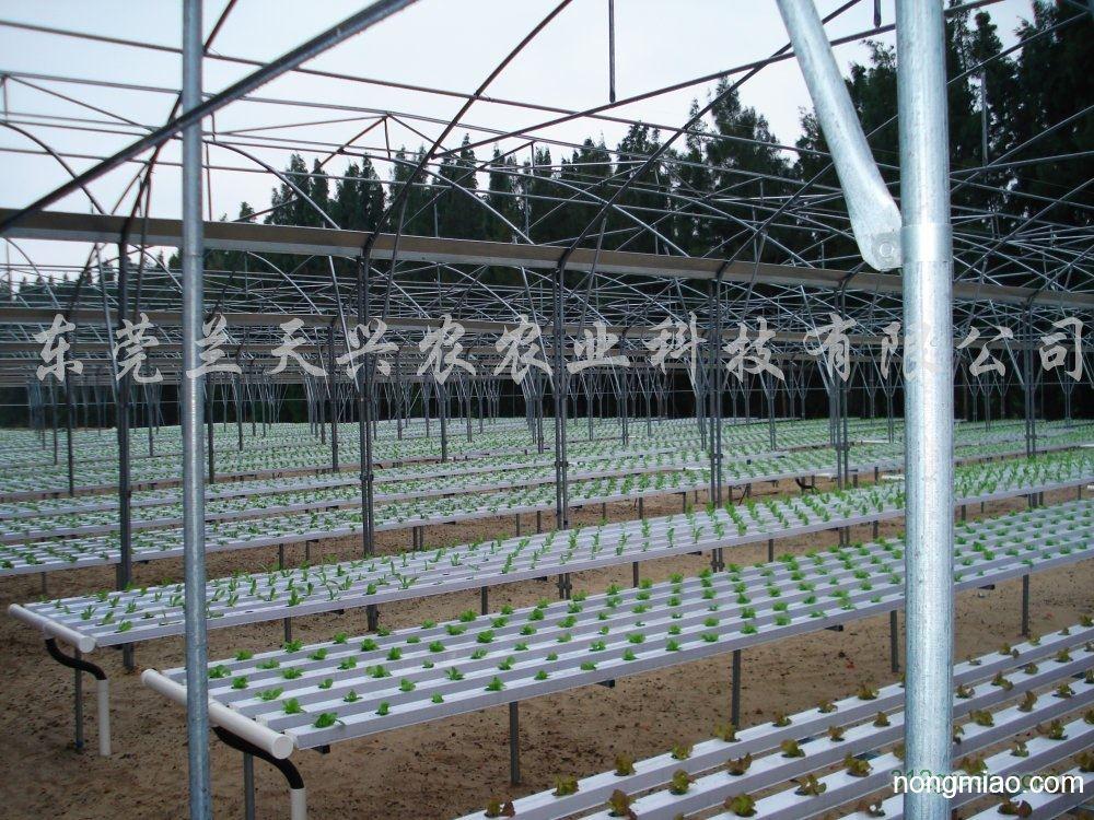 供应温室大棚蔬菜无土栽培设备