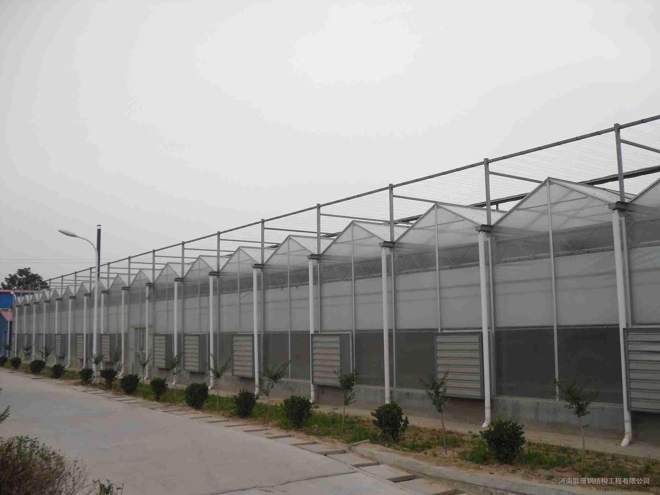一级施工 甲级设计钢结构|温室大棚图片及价格-山东钢