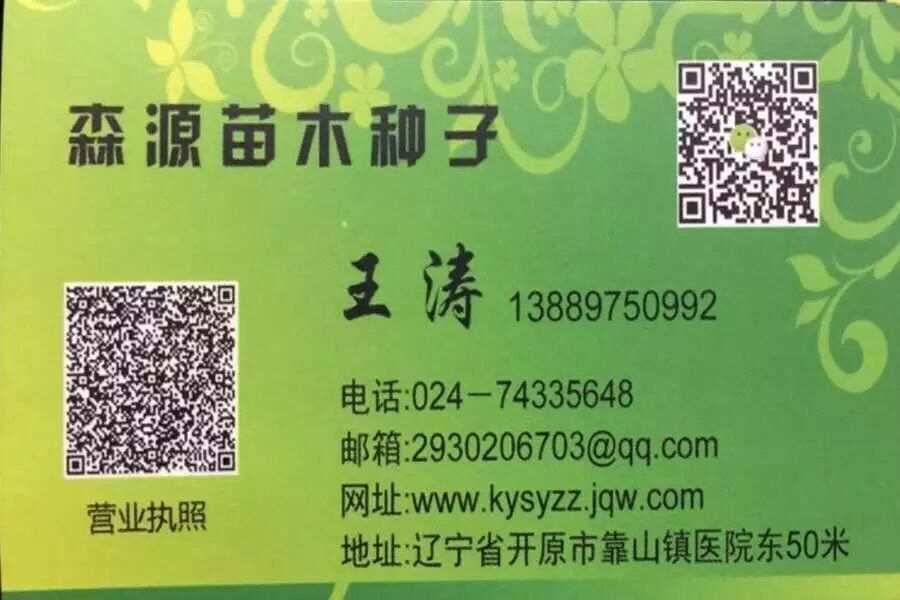 糖槭种子价格