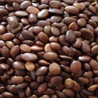 当年新採种子 皂角种子 皂角籽40元一斤 净种子 皂角树种子