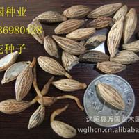【林木种子】白榆种子 棕榈种子 皂角种子 紫丁香种子 批发零售