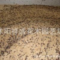 【厂家直销】曼地亚红豆杉种子 南方 沙藏2年  支持货到付款