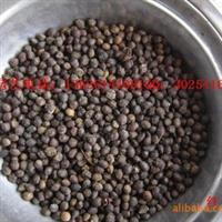 批发供应:红豆杉种子,桂花种子等