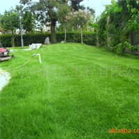 供应草坪施工、草坪修剪、割草、草坪建植