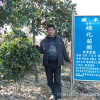 浏阳花木之乡供应各种绿化苗木 乔木