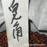 供应大小粒皂角种子 当年新采 量大优惠