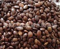 皂角种子,当年新采购皂角种子,一斤只卖23