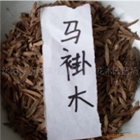 低价供应,马褂木种子。喜树种子。皂角种子。