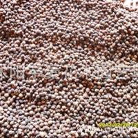 【公司直销】沙藏曼地亚红豆杉种子 支持货到付款