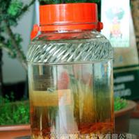 河南上禾实业 批发供应:红豆杉,红豆杉种子酒