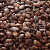 供应优质大小皂角种子 净种子 高产 保质保量 当年新采种子