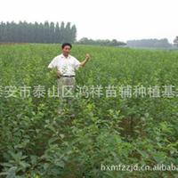 批发供应优质绿化苗木榆叶梅,支持混批厂