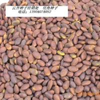 出售今年新采收的皂角种子
