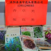 批发原装进口菊花种子(图)