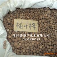 批发优质进口花卉种子种苗-原装进口高档榆叶梅种子(图)