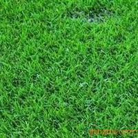 (精)专业承接草坪绿化设计施工-6元/平方米