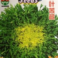 蔬菜种子碎叶苦苣锯齿形明目菜产量高效益好叶片薄脆嫩5g/袋