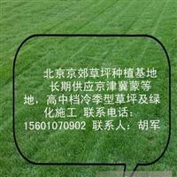 朝阳销售草坪朝阳绿化草坪 朝阳别墅草坪厂家价格